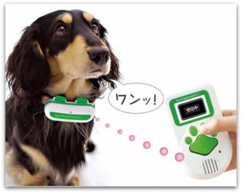 traductor_perro