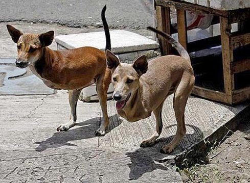 perros_canguro